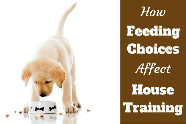 House training: feeding choices make a massive difference