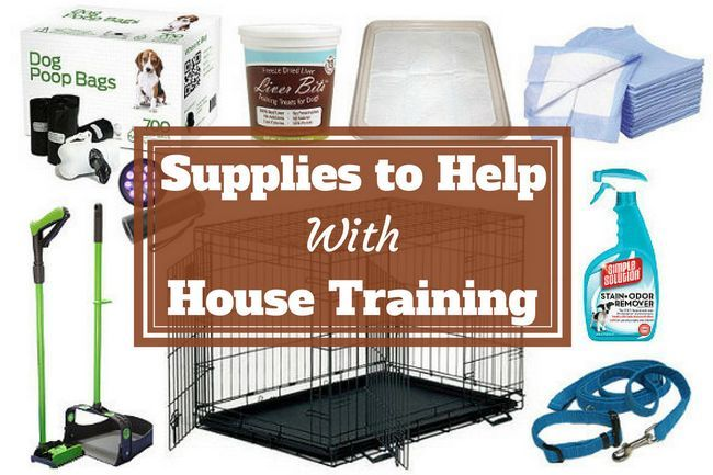 House training products, supplies and equipment – a buyers guide