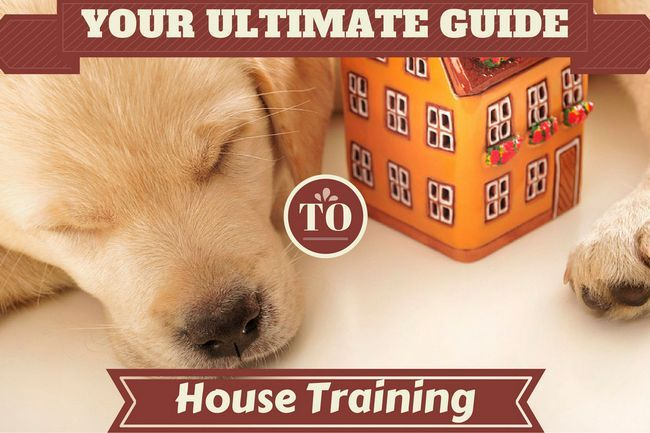 House training: the ultimate guide!
