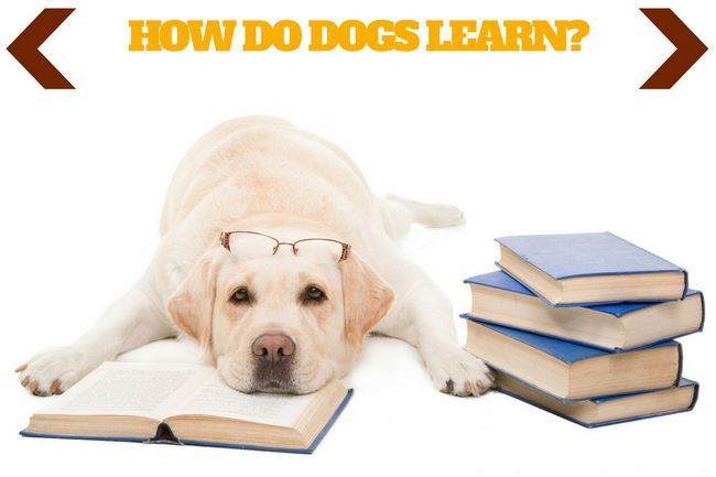 How do dogs learn? – a little theory to help your training