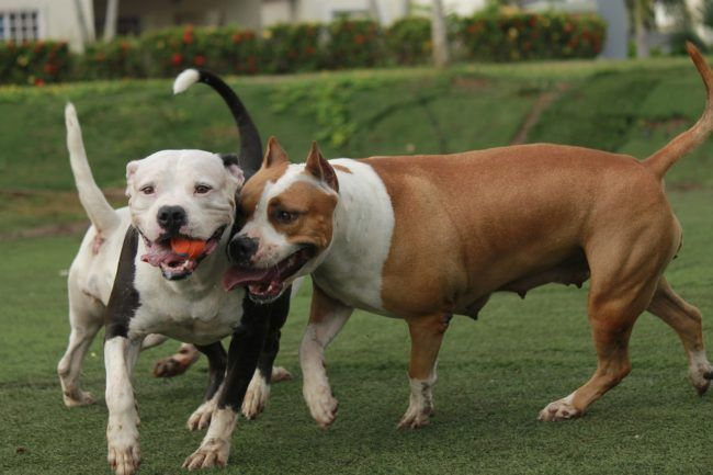 dogs-1280034_1280