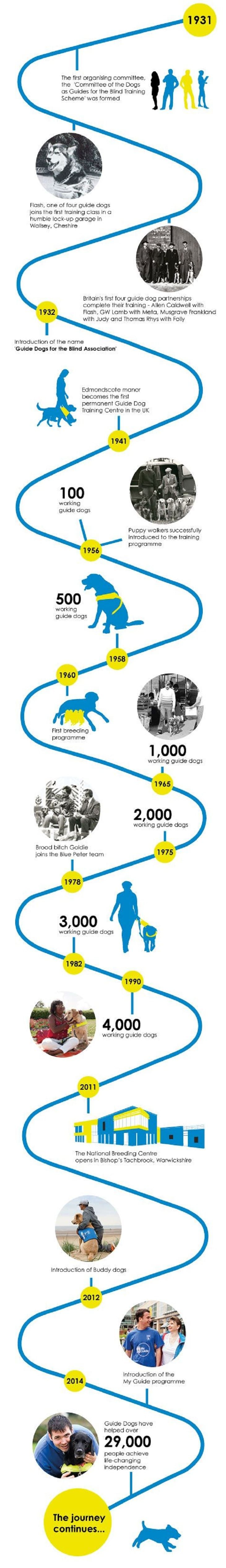 Guide dogs infographic