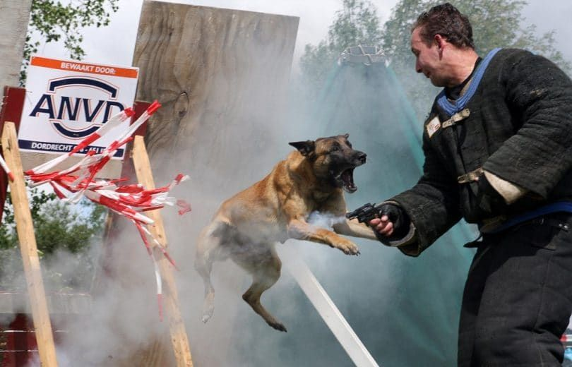 Police dog attacking