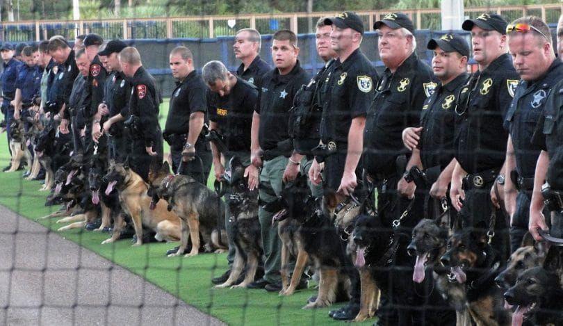 Shepherds as police dogs