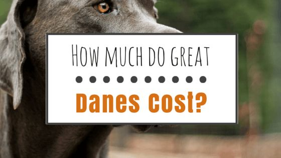 How much do great danes cost?