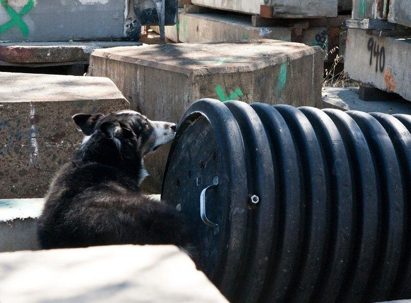 Puppy and weights