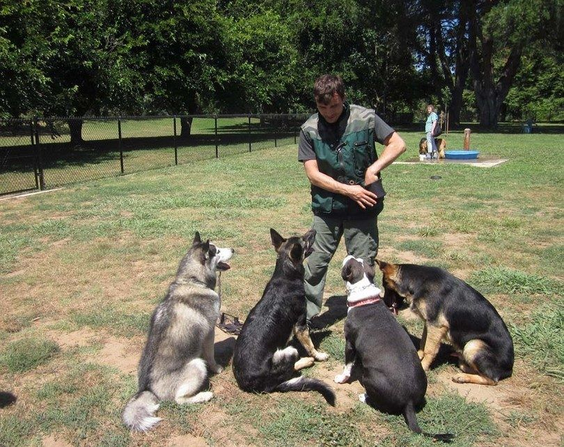 How to become a dog trainer: institutions, activities & certifications
