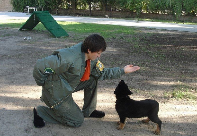 Dog training private lessions