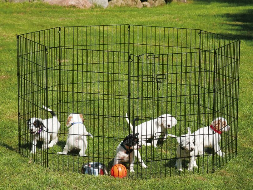 How to build a dog pen: a step-by-step guide for beginners
