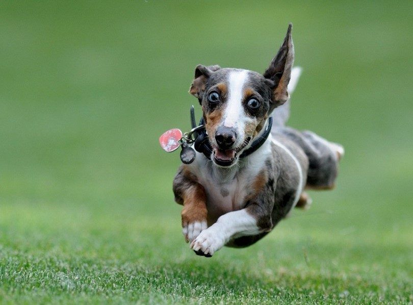 How to calm a hyper dog: tips and tricks to redirect your dog's energy