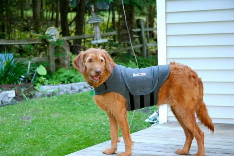Thundershirt Dog Jacket for Anxiety
