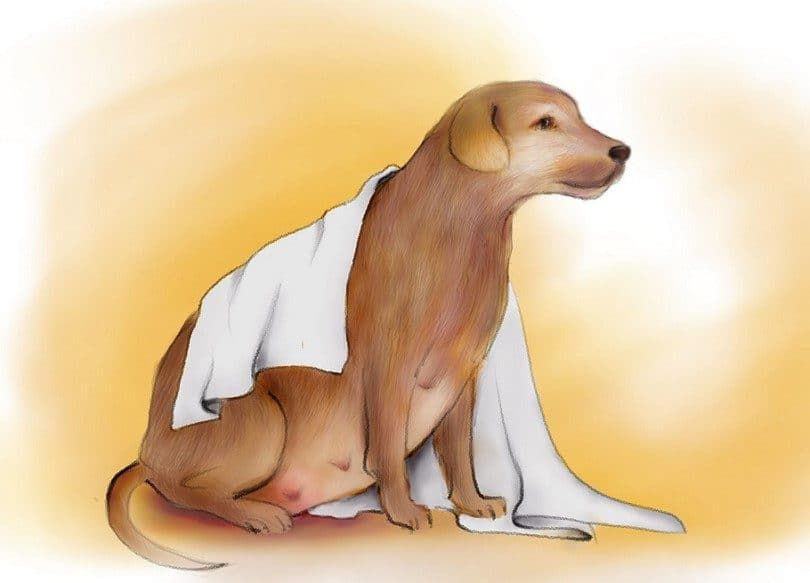 Prepare a nursery for pregnant dog