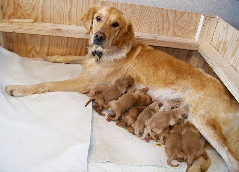 Keep mother and puppies together