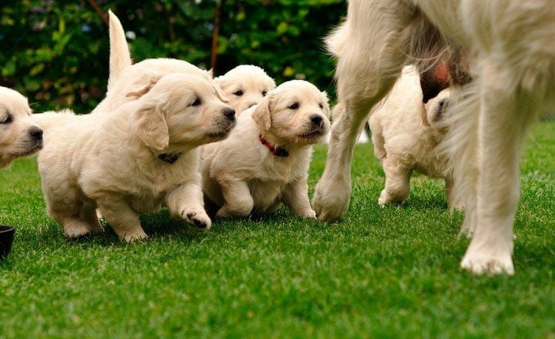 Mommy dog and puppies