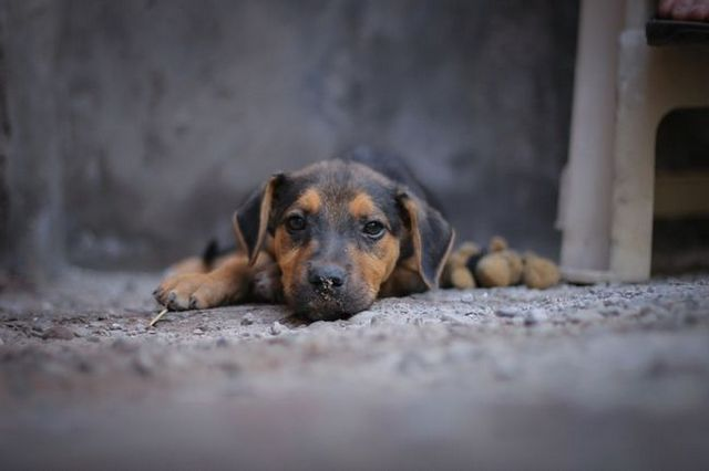 dog-245356_1280