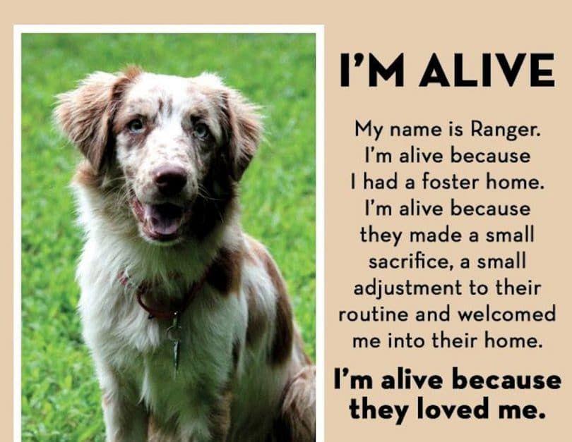 I am alive dog