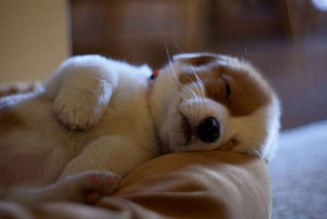 How to Get a Puppy to Sleep Through the Night 2