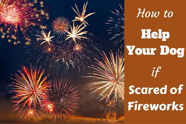 How to help calm a dog scared of fireworks: short and long term fixes