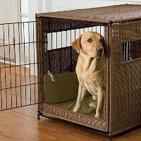 A Labrador puppy in a stylish crate