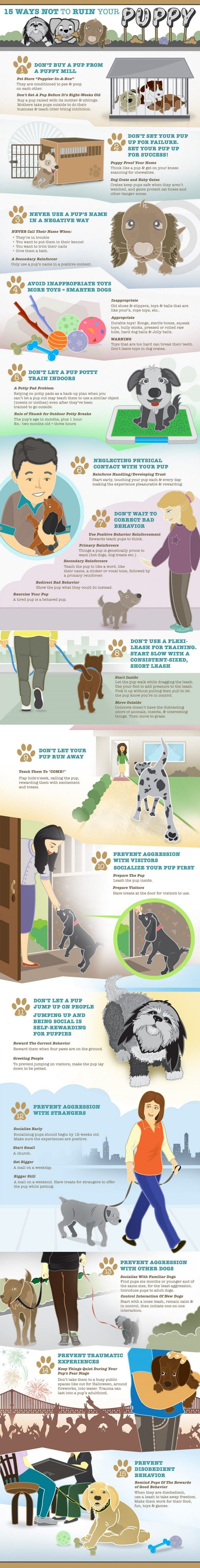 Puppy training infographic
