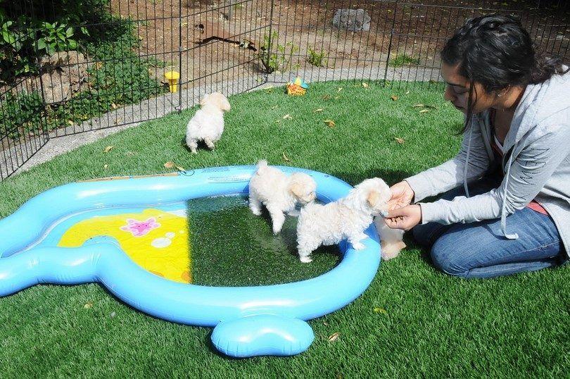 Puppies training
