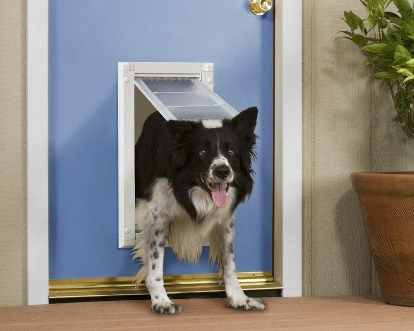 How to install a doggie door: instructions and diy ideas