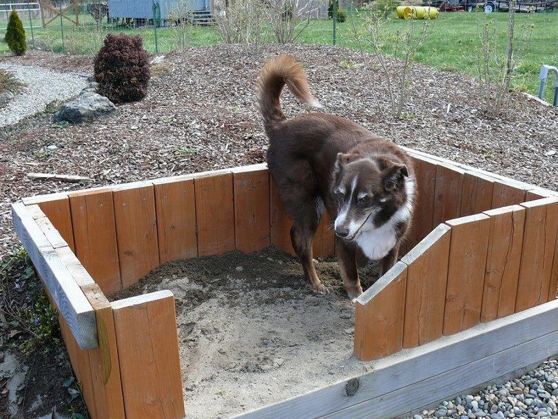 Doggy pit with fence
