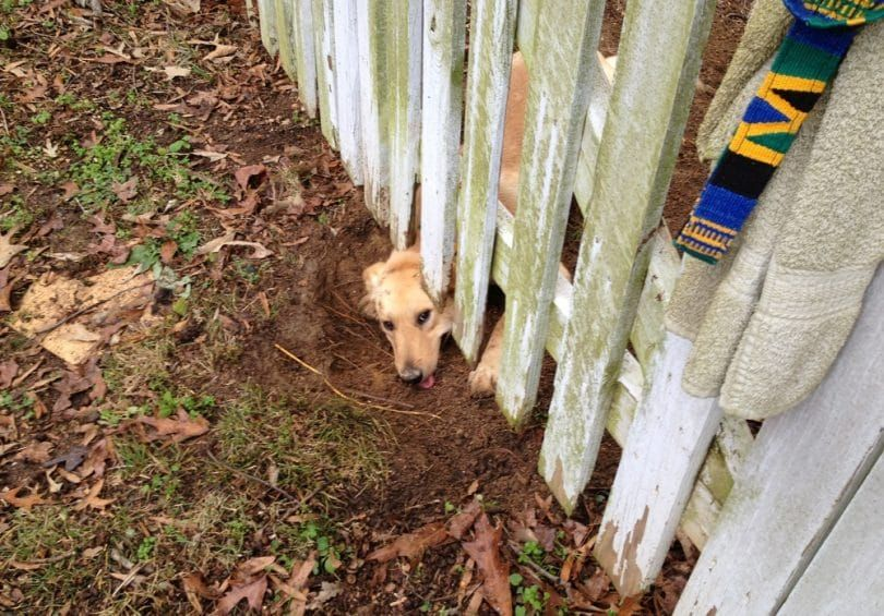 Digging under fence