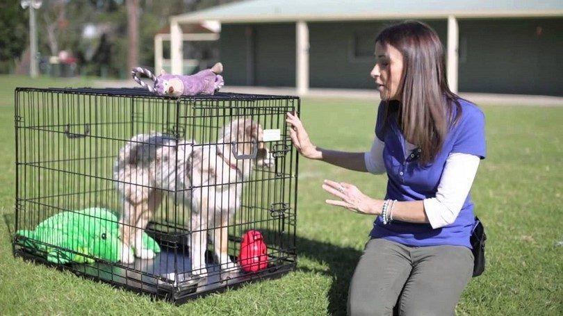 Train your puppie