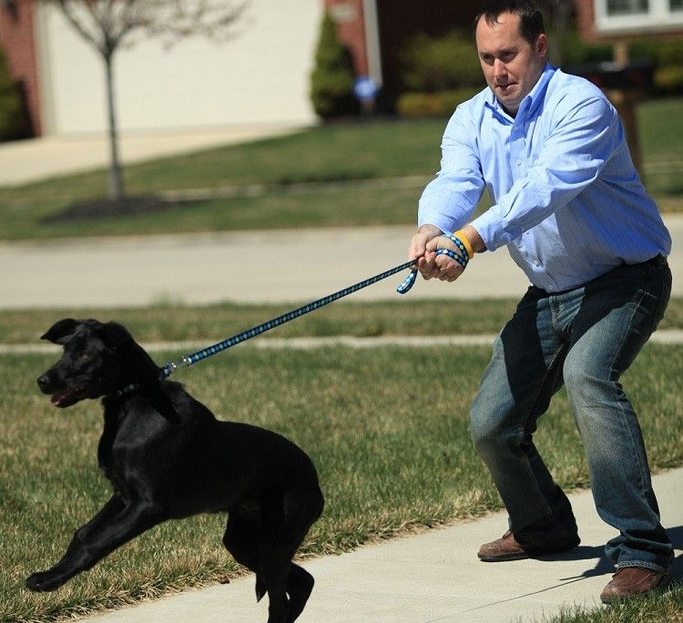 How to leash train a dog: learning to lead