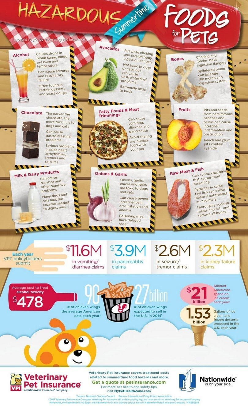 Toxic foods for dogs infographic