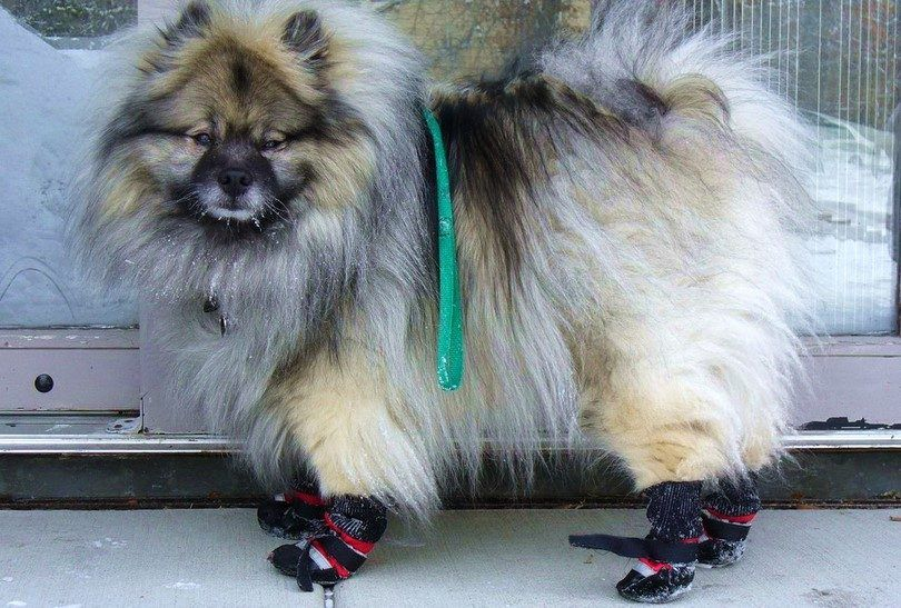 How to make dog booties: a fun diy project for buster's paws