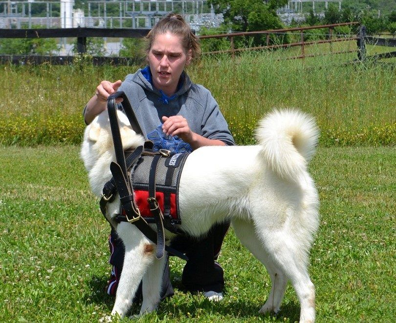 Training to be a service dog