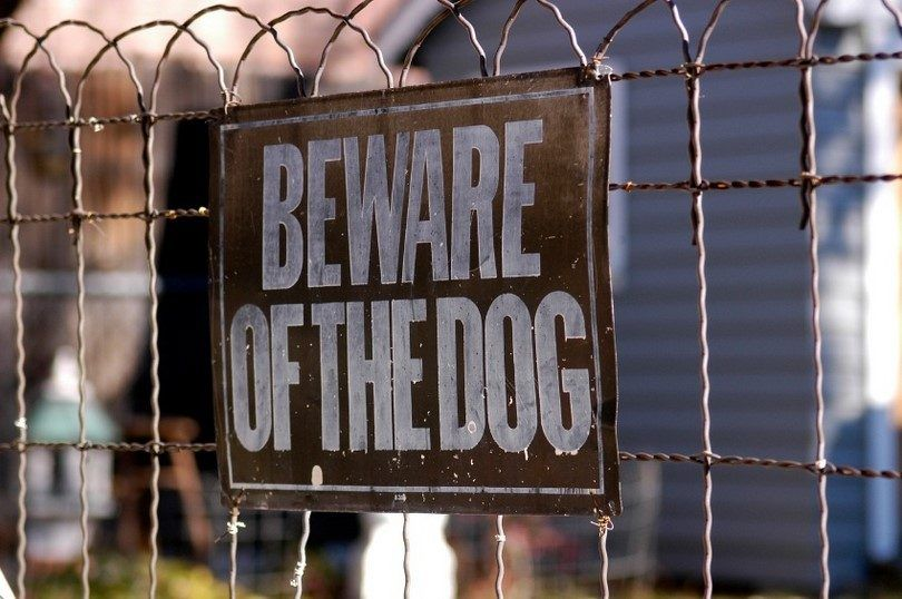 How to overcome fear of dogs: cynophobia in adults and children