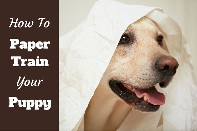 How to paper train your puppy or dog the easy way
