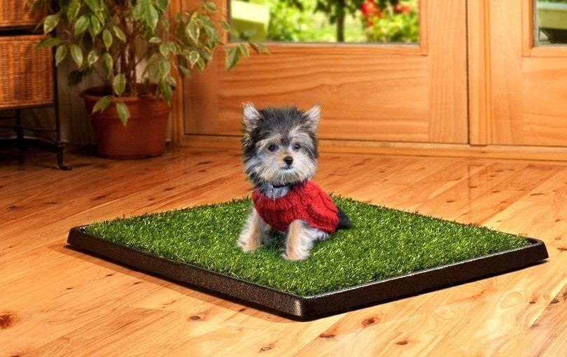 Puppy on a potty pad