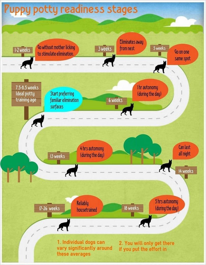Puppy potty stages infographic