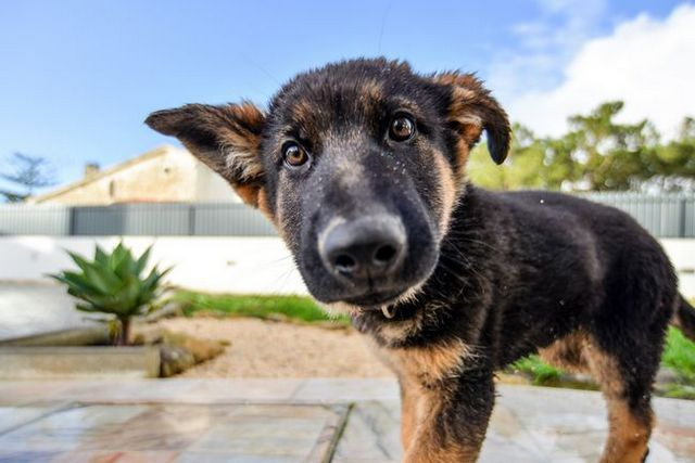 How to raise a puppy: the complete guide
