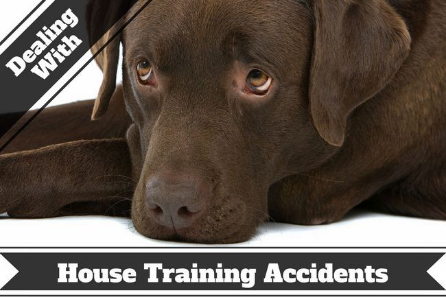How to remove pet stains and odors – accidents do happen