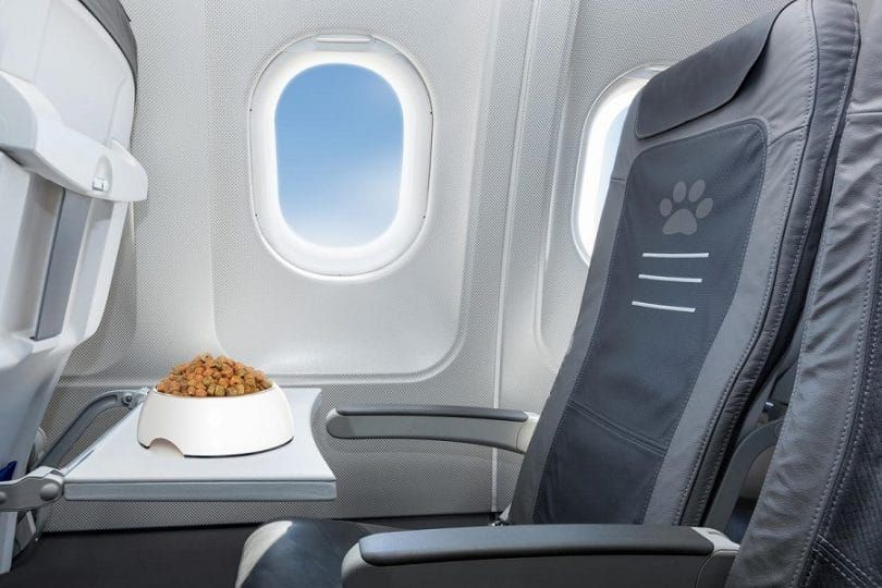 Flying with Fido
