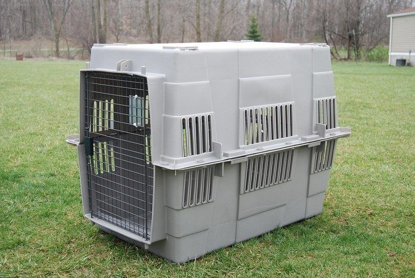 Dog crate for transport