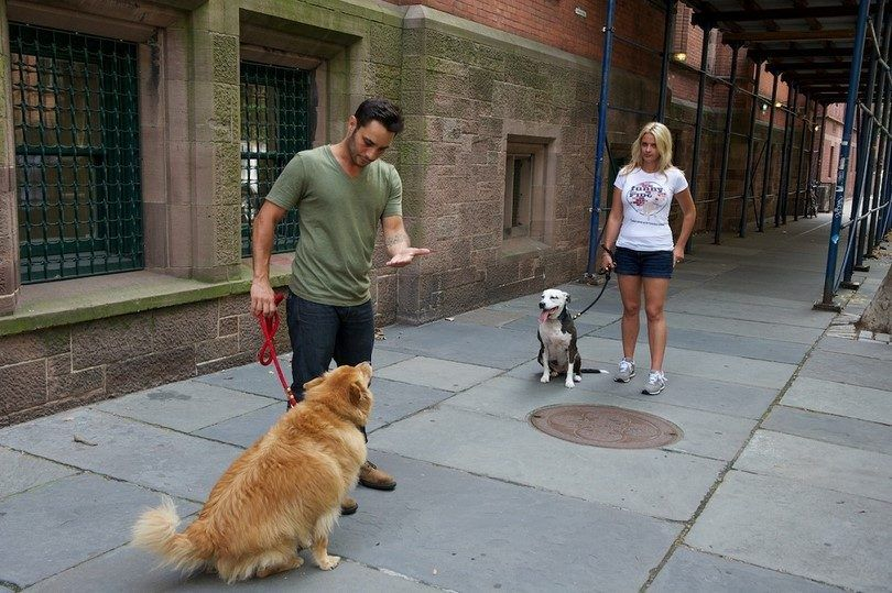 How to socialize a dog: helping man's best friend make friends