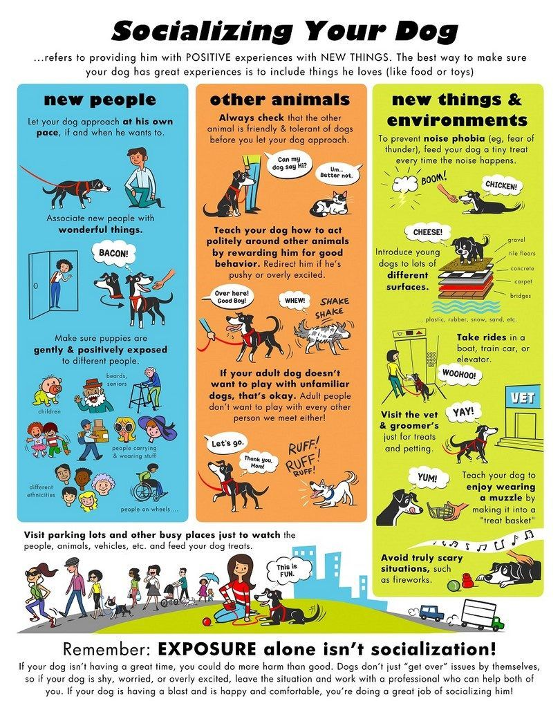 Socializing your dog infographic