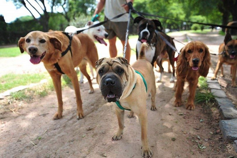How to start a dog walking business: a healthy and enjoyable way to make money