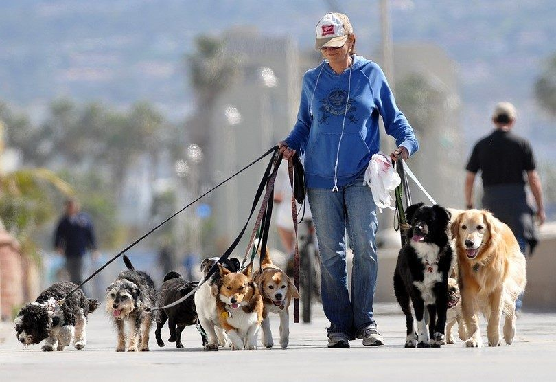 Dog walker with agency