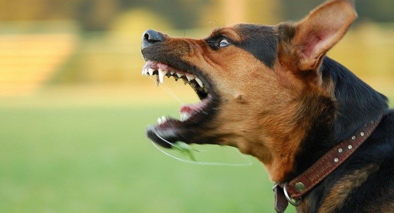 How to stop aggressive behavior and socialize your dog
