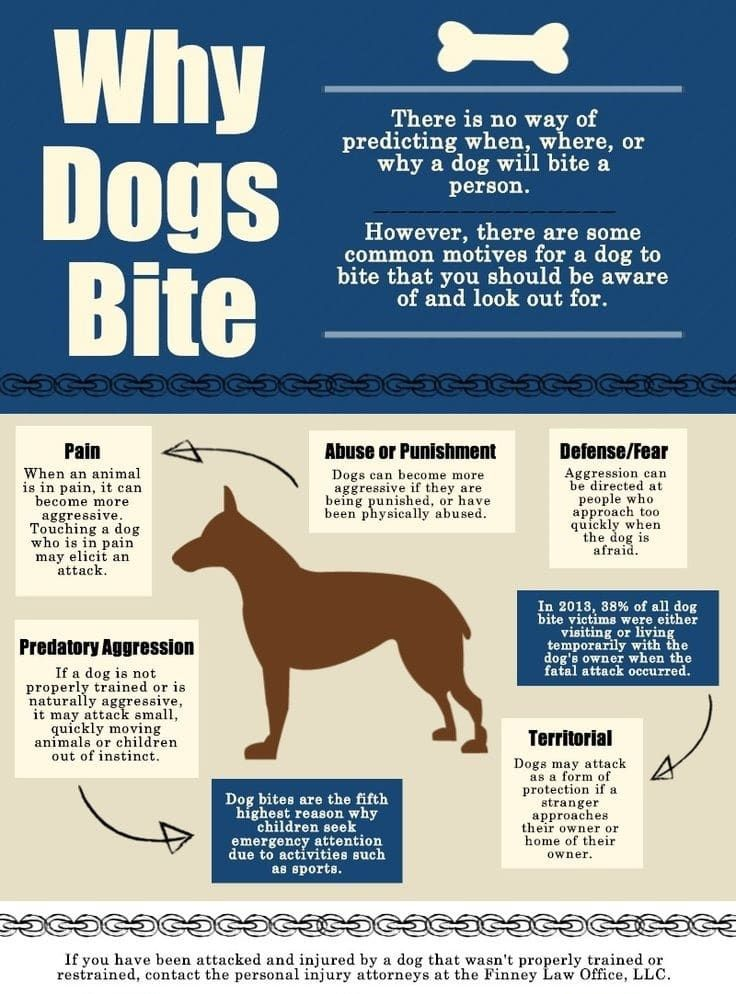 Why dogs bite