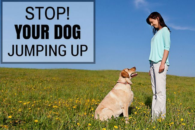 How to stop your dog or puppy from jumping up