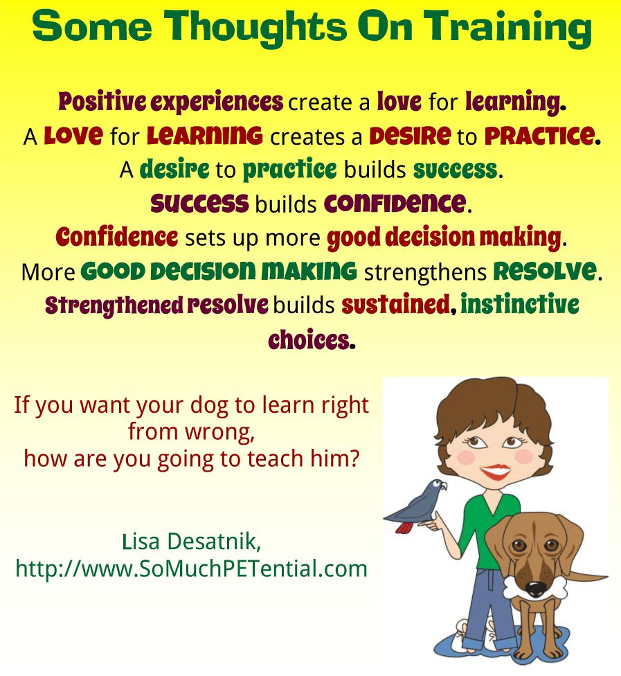 Thoughts on dog training