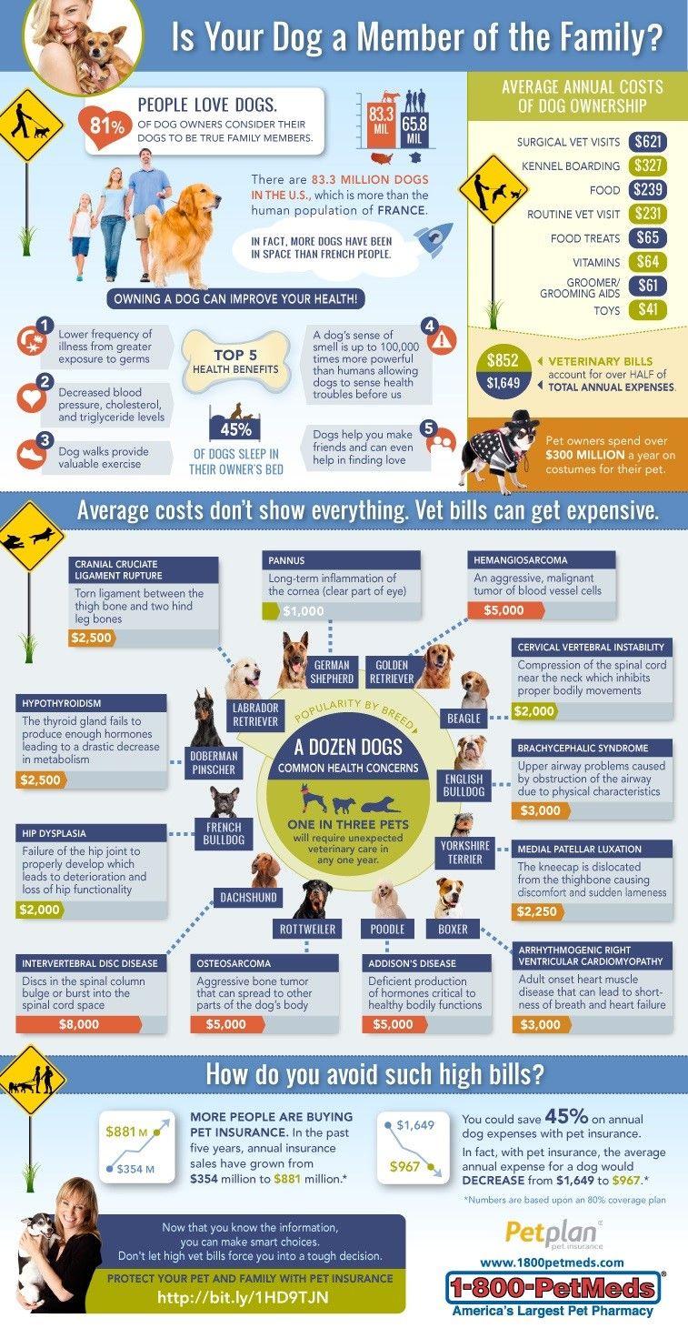 Dog Insurance Infographic